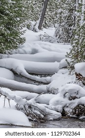 Typical snow scene in Yellowstone national park in winter.CR2