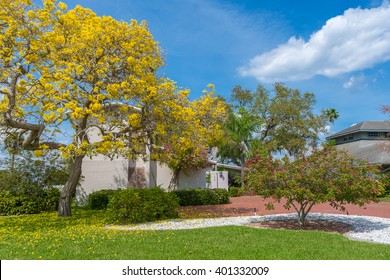 Typical Southwest Florida Concrete Block and Stucco Home with a huge yellow Tabebuia tree in the side yard in Springtime.
