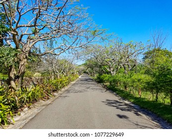 Typical street in the Caribbean