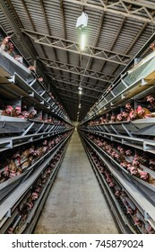 Typical styandard multilevel production line conveyor of chicken eggs of a poultry farm. Limited depth of field.