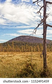 A typical summer landscape in the Finnish Lapland. A snag in the foreground and the Yllas fjell behind the swamp.