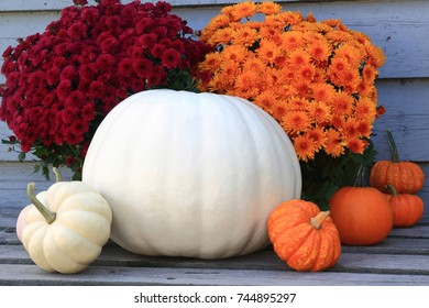 Typical symbols of Fall (Autumn) season, Thanksgiving and Harvest celebration, big white pumpkin, orange and white squashes and orange, red, fall flowers (Fall Mums), background