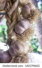 typical Trapani products: a braid made from large Nubia red garlic heads