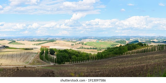 Typical Tuscany landscape in summer, with cultivated fields and wine yards, cypress trees and old farm buildings in a hill and valley landscape, near Montepulciano and Montalcino, Val d'Orcia, Italy
