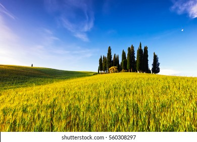 Typical Tuscany scene with cypresses