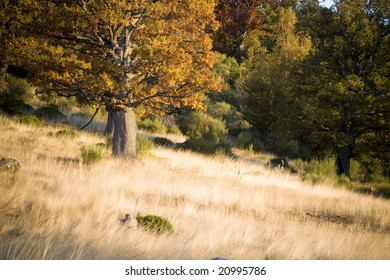 Typical vegetation of an Atlantic continental forest and its adjacent meadows at the beginning of the autumn