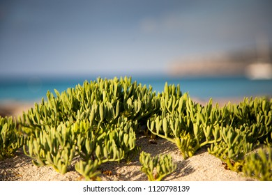 Typical vegetation of the Mediterranean coast and at the background the sea unfocused