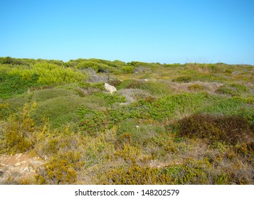 Typical vegetation on the windward north coast of Menorca, Spain