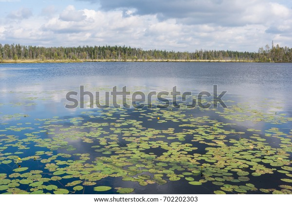 Typical view of the forest lake with water lily leaves in the foreground in Karelia, northwest of Russia