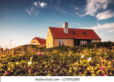 Typical yellow holiday house at the danish beach with wild roses flowers in colorful sunset sun light. Coastline of the Top of Denmark in Skagen in North Jutland in Denmark, Skagerrak, North Sea