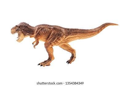 Tyrannosaurus rex  , Dinosaur on white background .