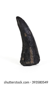 Tyrannosaurus rex Replica Fossil Tooth on White Background