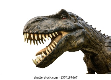 Tyrannosaurus Rex or T-Rex is a carnivorous genus of Coelurosaurian Theropod dinosaur, Tyrannosaurus Rex or T-Rex lived in the Cretaceous period, isolated on white background with clipping path