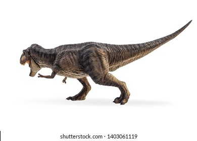 Tyrannosaurus T-rex ,dinosaur on white background  .