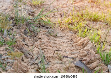 tyre track marks in mud In the field