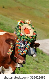 TYROL, AUSTRIA - SEPTEMBER 2014 : Cow with a headdress during a cattle drive (Almabtrieb) in Tyrol, Austria on September 17, 2014. It is a move of cattle from Alps to the valley in Autumn