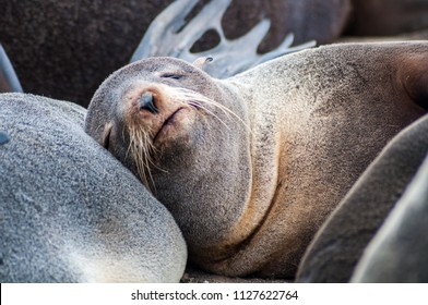 """""""Tyuleniy"""" means seal in Russian. And this speck of rock at the SE corner of Sakhalin earns its name from the hordes of northern fur seals and Steller sea lions who use its beaches and scarps to breed"""
