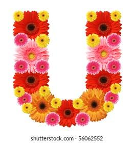 U, flower alphabet isolated on white