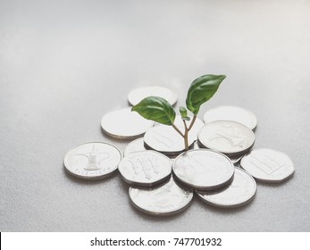 UAE coins. Coins and green plant.