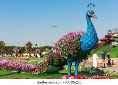 UAE, DUBAI - DECEMBER 30: dubai miracle garden with over million flowers on a sunny day December 30, 2014