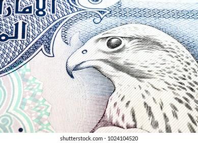 UAE five hundred dirham close up falcon