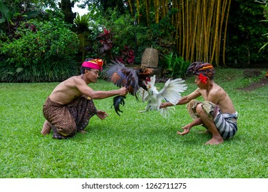 Ubud, Bali / Indonesia - February 18, 2012 - Two man doing a practice session of cockfighting