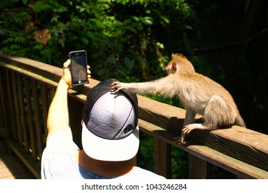 UBUD, BALI, INDONESIA - JANUARY 2018: Young monkey trying to steal tourist's cap while he's taking a selfie