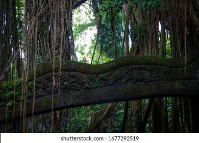 Ubud, Bali, Indonesia - May 14, 2017 - A huge Banyon Tree attemps to engulf Barong Lion Bridge in Monkey Forest sanctuary