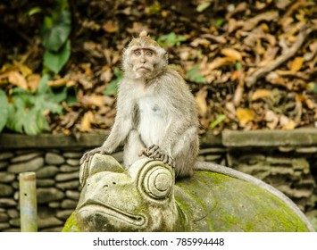 UBUD, INDONESIA - MARCH 17: monkeys in the Sacred Monkey Forest Sanctuary on March 17, 2017 in Ubud, Indonesia. Ubud is one of the most popular tourist destinations on Indonesia's Bali.