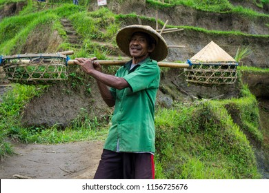 Ubud,Bali/Indonesia - July 31st 2018: Portrait of an Asian worker in a conical straw hat with a double-edged sword at a rice terrace field. Selective focus.