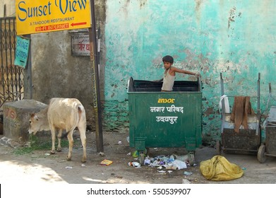 UDAIPUR, INDIA - NOV 27, 2012: Unidentified street boy. He looks for food in the waste. The cow enjoy the food. For rich people is a sign for a restaurant. The contradictions could not be greater.