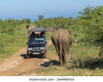 Udawalawe, Sri Lanka: 03/24/2019:Tourists in a safari vehicle viewing elephant in the National Park