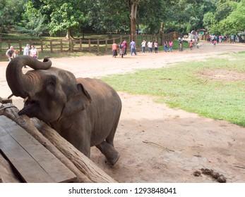 Udawalawe/Sri Lanka - December 13 2015: Feeding the cubs at the Udawalawe Elephant Transit Home. The Udawalawe Elephant Transfer Home is a facility within Udawalawe National Park in Sri Lanka.