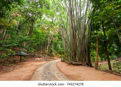 Udawatta Kele Kandy Royal Forest Park or Udawattakele Sanctuary is a historic forest reserve on a hill-ridge in the city of Kandy, Sri Lanka