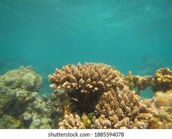 Uderwater Scenery in Karimunjawa Islands