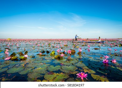 Udon Thani, thailand, January 15: morning on the sea of red lotus (Pink water lilies lake) with a small passenger boat in Udon Thani, thailand 2017