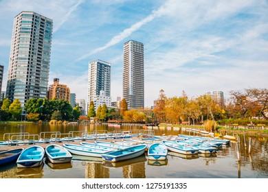 Ueno park Shinobazu pond and autumn maple street in Tokyo, Japan