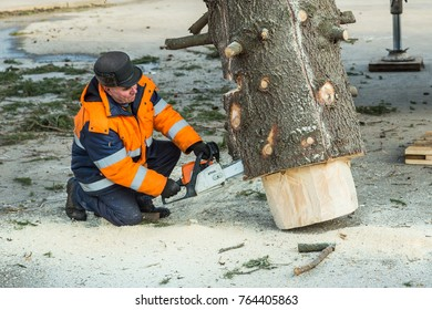 Ufa, Russia November 24, 2017: a city service worker saws a tree with a gasoline powered saw.