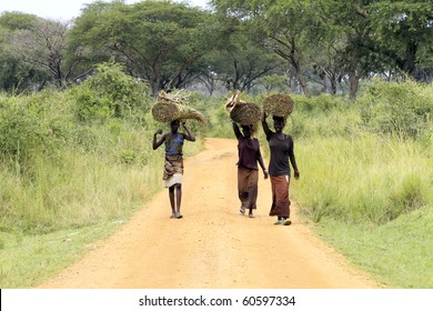 UGANDA - AUGUST 14: Women of the Acholi ethnic transporting goods, the Acholi suffered the seizure of more than 20,000 children by the LRA to become fighters, August 14, 2010 near Gulu, Uganda