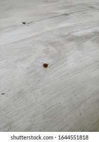 Ugly, bare, unfinished whitewashed bathroom floor. Shown here as Luan board plywood underlayment.