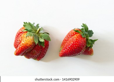 Ugly organic home grown strawberries on white wood background. Strange funny imperfect fruits and vegetables, misshapen produce, food waste concept. Top view, copy space.