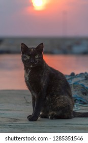 ugly stray cat standing at dock in sunset. Fish nets behind the cat.
