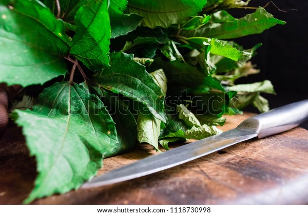 Ugu. fresh green vegetable spinach pumpkin leaves or Nigerian Ugwu on vintage wooden chopping board with knife isolated on dark background for rustic cooking concept for local Market