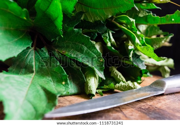 Ugu. fresh green vegetable spinach pumpkin leaves or Nigerian Ugwu on vintage wooden chopping board with knife isolated on dark background for rustic cooking concept