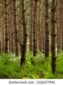 UK, Sherwood Forrest, Nottinghamshire in October