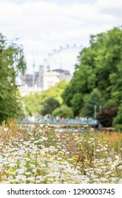 UK St James Park green grass weeds with white daisy flowers in summer closeup pattern of bloom and blurry background of cityscape