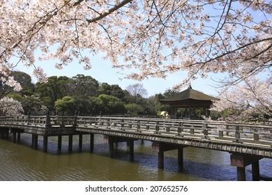 Ukimido Temple In Nara In The Spring