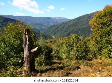 Ukraine. Beautiful carpathian mountains.