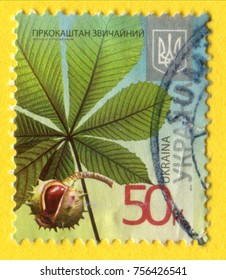UKRAINE- CIRCA 2013: A postage stamp printed in Ukraine shows a picture of an Ordinary Rosskastanie  Chestnut, Flora series, circa 2013