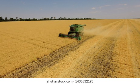 Ukraine, Kiev region, July 25, 2019,Harvesting wheat in summer. Two green harvesters working in the field. Combine harvester of an agricultural machine collects ripe golden wheat on the field. View f